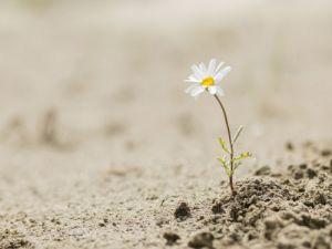 Resilienz - für Erfolg in bewegten Zeiten